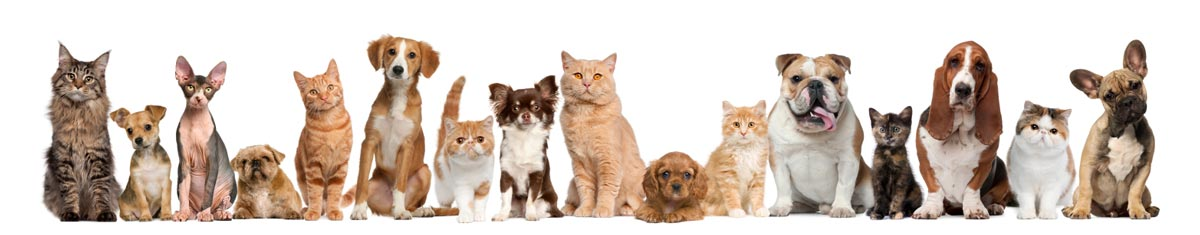animal health and healing therapy